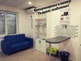 Клиника Ремонт животных, фото №3