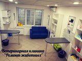 Клиника Ремонт животных, фото №6