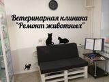 Клиника Ремонт животных, фото №4