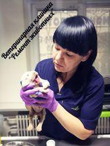 Клиника Ремонт животных, фото №8